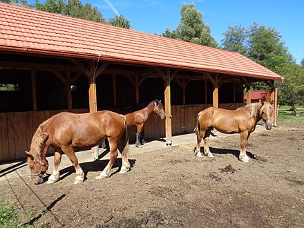 The Međimurje horse stud farm, Žabnik at Sveti Martin na Muri, Croatia, is owned by the Međimurje nature public institution