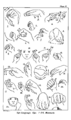 Ethnological Studies Among the North-West Central Queensland Aborigines - Plate II - Sign language.png