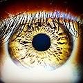Eye of a human.jpg