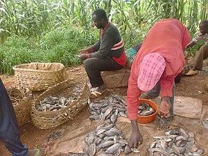 Bambalang (village) - Fishing in Bambalang