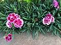 FLOWERs-34.jpg