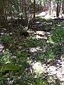FLT M09 8.02 mi - Stepping rocks over wet area, 90' long - panoramio.jpg