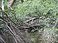 Fallen Trees in Splitrock Creek - panoramio.jpg