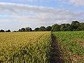 Farmland, Brightwalton - geograph.org.uk - 887802.jpg