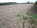 Farmland, Godwinscroft, Hampshire - geograph.org.uk - 92457.jpg