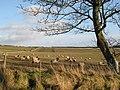 Farmland, Torney's Fell - geograph.org.uk - 1138644.jpg