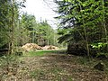Felled timber in Longleat Forest - geograph.org.uk - 166033.jpg