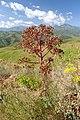 Fergana Range 2.jpg