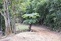 Fern tree (15118037429).jpg