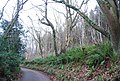 Ferns at the side of Luccombe Lane - geograph.org.uk - 1660457.jpg