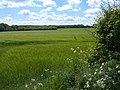 Field - panoramio (18).jpg