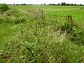 Fields on South Moor, near Andersea - geograph.org.uk - 1391454.jpg