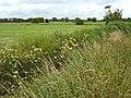 Fields on South Moor, near Andersea - geograph.org.uk - 1391457.jpg