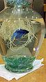 Fish McRobbie 2012 09 13.jpg
