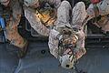 Flickr - DVIDSHUB - Raid force trains to seize offshore oil platform (Image 2 of 5).jpg