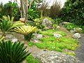 Flickr - brewbooks - Cycads at Paloma Gardens.jpg