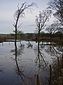 Flooded field near Genoch Mains - geograph.org.uk - 662157.jpg