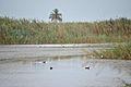 Flora y fauna en una de las lagunas del Hondo.jpg