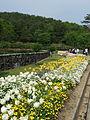 Flower-center135628.jpg