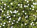 Flower.2255.JPG