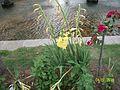 Flower 31.jpg