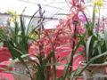Flowermarket6.jpg