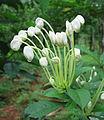 Flowers (136).jpg