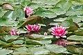 Flowers 2012 Ausflug an die Jagst (7735160654).jpg