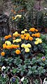 Flowers in Prantik Shantiniketan.jpg