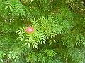 Flowers of Cuba -Laslovarga (3).JPG