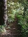 Footpath in Ploughman Wood - geograph.org.uk - 1013609.jpg