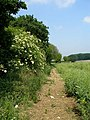 Footpath toward Burch's Rough - geograph.org.uk - 454339.jpg