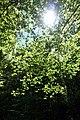 Forest @ Roc de Chère @ Talloires (34836773703).jpg