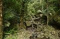 Forest in East Khashi hills district JEG7535.jpg