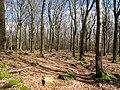 Forest in the Heidetränk Oppidum 2.jpg