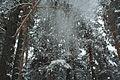 Forest near Ob river in Altai Region 21.JPG