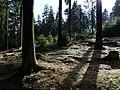 Forest next to the Fuchstanzweg.jpg