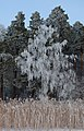 Frost - panoramio - Bengt Nyman (1).jpg