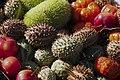 Fruits Exotiques CL J Weber (3) (23649244676).jpg