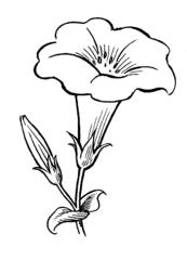 Image Result For Gambar Mewarnai Bunga Tulip