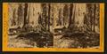 Galen's Hospice, Mariposa Grove, Mariposa County, Cal, by Watkins, Carleton E., 1829-1916.png