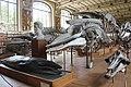 Galeries d'Anatomie comparée et de Paléontologie (20154458930).jpg