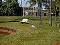 Garça Branca Grande(Casmerodius albus) no Parque do Lagoa em Altinópolis - panoramio.jpg