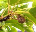 Garden orb weaver18.jpg