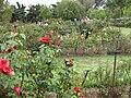 Gardenology.org-IMG 5365 hunt0904.jpg