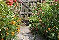 Garten Juli 2014 (15302883839).jpg
