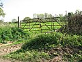 Gate into cattle pasture - geograph.org.uk - 1278095.jpg