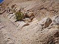Geologic formations at Skull Rock (28969572592).jpg