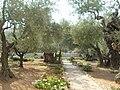 Getsemane1.JPG
