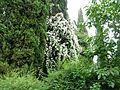 Giardino di Ninfa 47.jpg